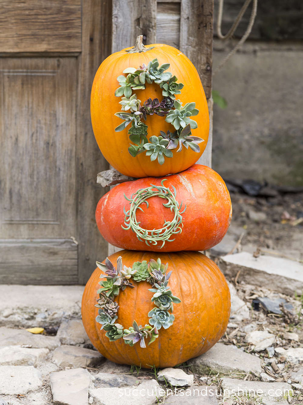 Pinterest picks no carve pumpkin ideas for Boo pumpkin ideas